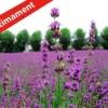 Taller d'herbes aromàtiques
